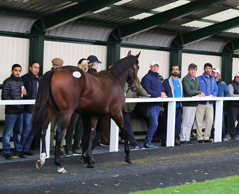 SALES: Mother Earth and Poetic Flare siblings in Orby Sale