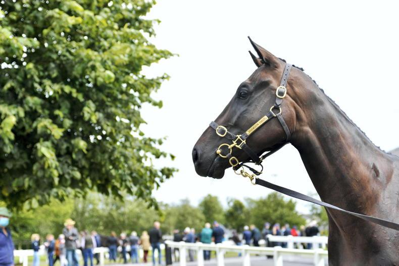 SALES: €50,000 filly tops low-key August Sale