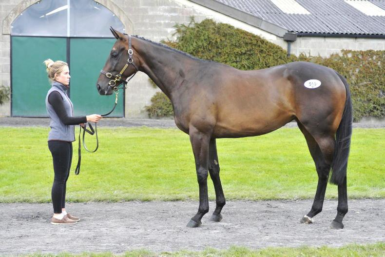 SALES: €50,000 filly tops muted August Sale