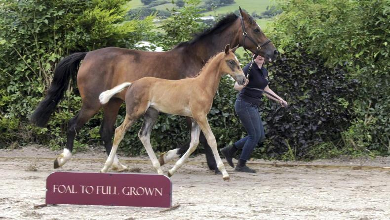 ADVERTORIAL: Boleybawn auction offers top show jumping lines