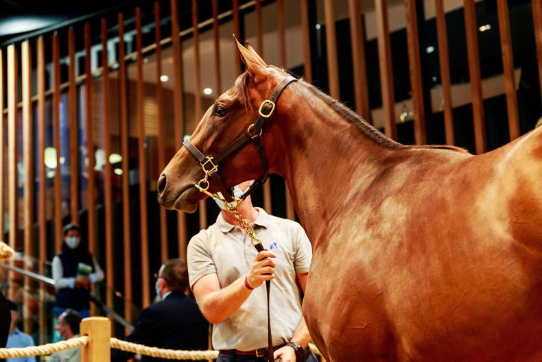 VIDEO: Andre Fabre to train €2.4 million Dubawi filly