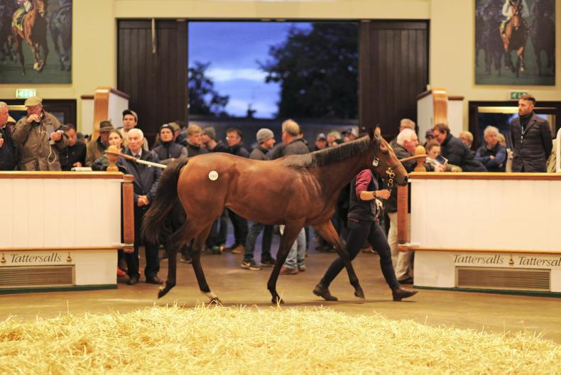Tattersalls release October Yearling Sale Books 2, 3 and 4