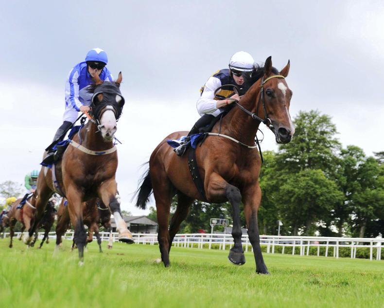 DONN MCCLEAN: Can an Irish-trained horse land the Ebor?