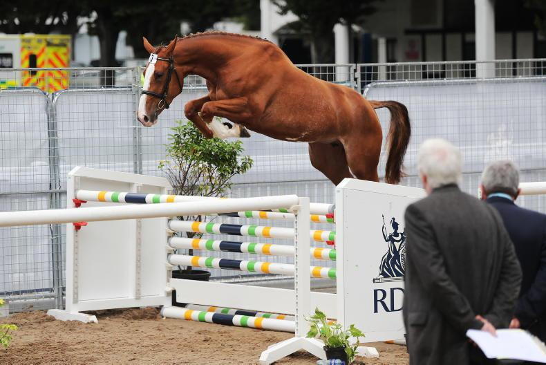 RDS NATIONAL CHAMPIONSHIPS: Electric three-year-old final
