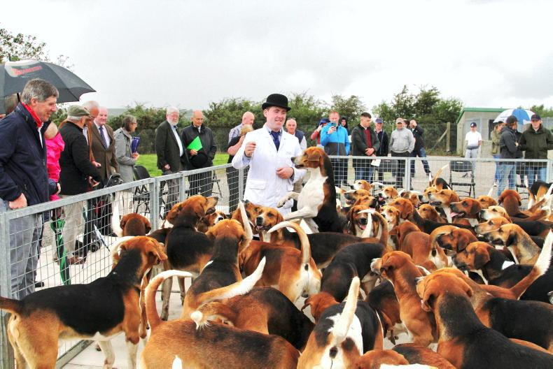 HUNTING: Hounds in fine fettle ahead of the season