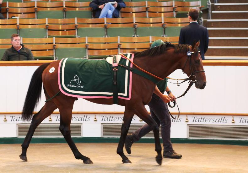 TATTERSALLS AUGUST SALE: Peter Doyle snaps up sale's best from Juddmonte