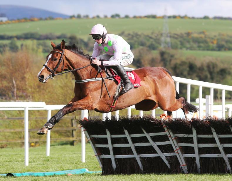 PARROT MOUTH: Fabulous Faugheen and pals on show