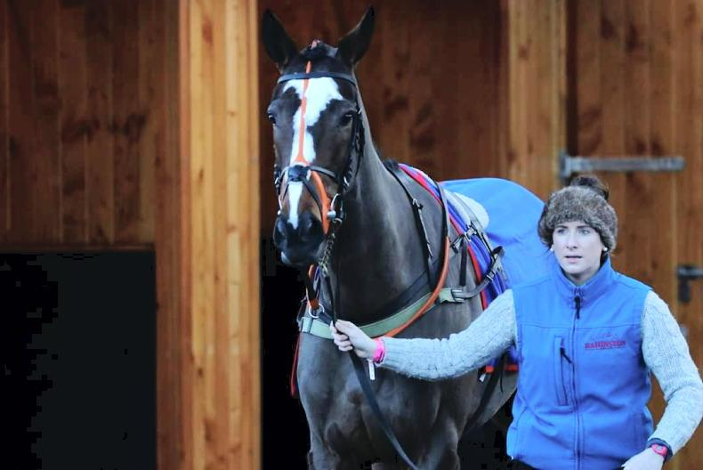 Considering a career in the equine industry?