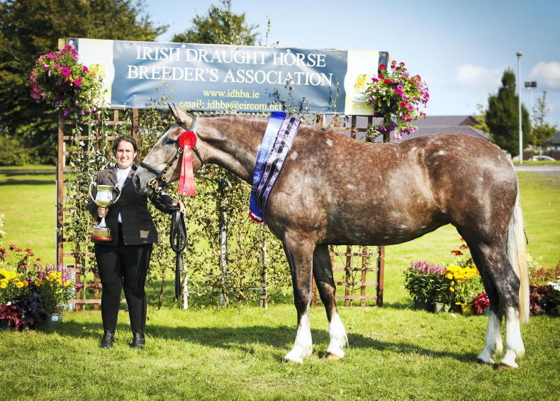 AROUND THE COUNTRY: Worthy champions showcased at Punchestown