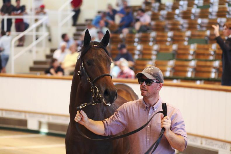 SALES: Clearance rate hits 86% at Newmarket yearling sale