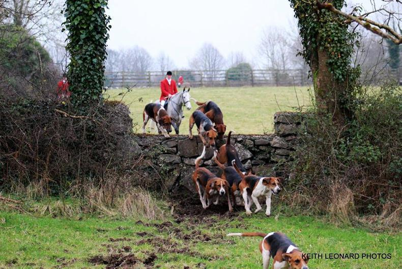 HUNTING FEATURE: Dartfield first for hunt horse hire