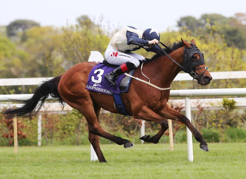 LEOPARDSTOWN SATURDAY PREVIEW: Make Kings one of your best bets at Leopardstown