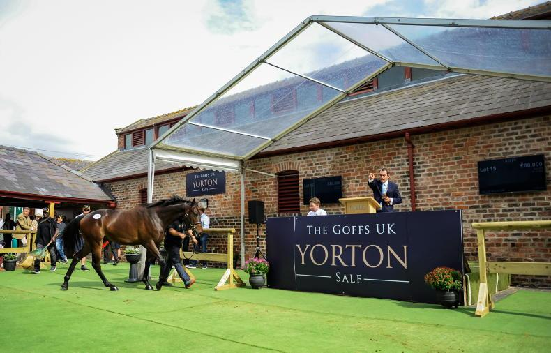 GOFFS UK YORTON SALE: Yorton Sale raises the bar in Wales
