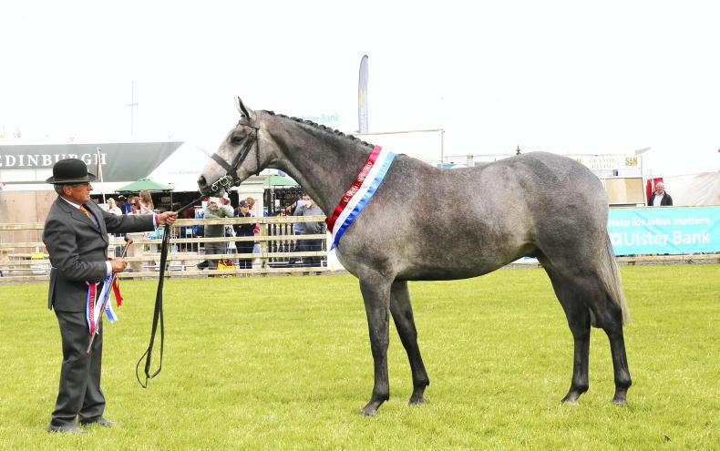 BALMORAL PREVIEW: All to play for with coveted youngstock titles