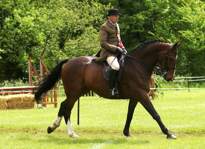 BALMORAL PREVIEW: Seasoned winners set to contest championships