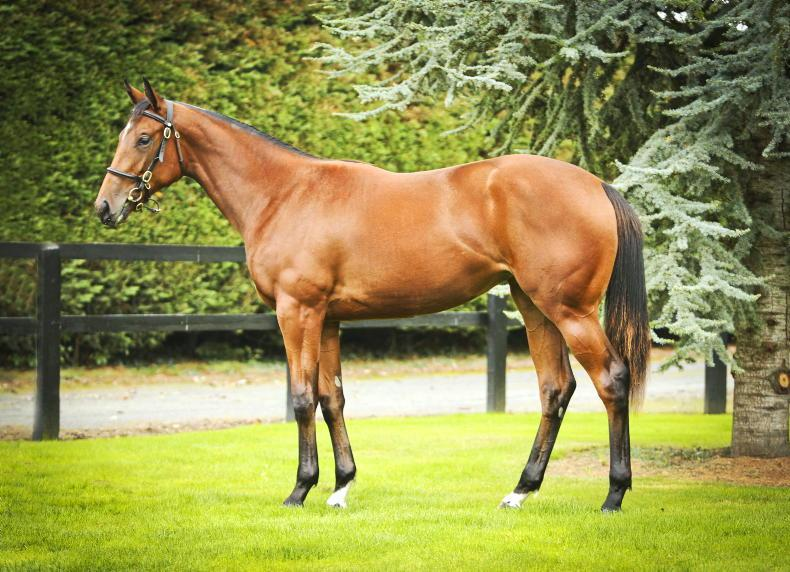 BREEDING INSIGHTS: Harrow boost for sales' filly