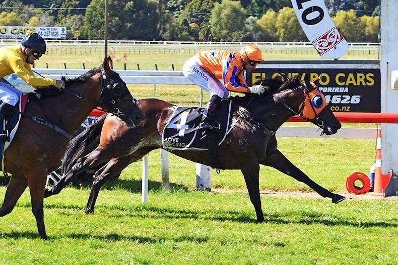 NEW ZEALAND: Coolmore spend NZ$4.1m on broodmare prospect