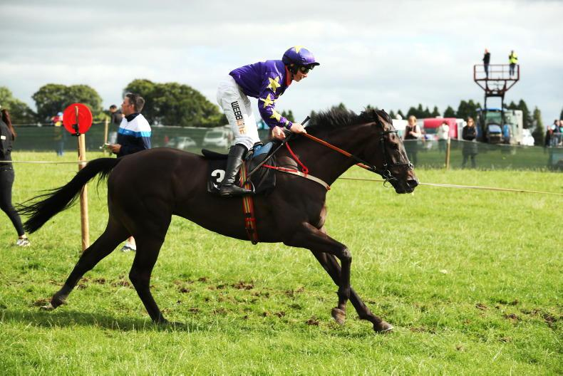 HORSE AND PONY RACING: McHugh, Kavanagh and Holohan record maiden winners