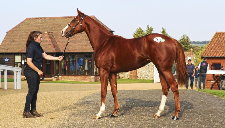 SALES: Zain Claudette owner pays £200,000 for filly's half-sister
