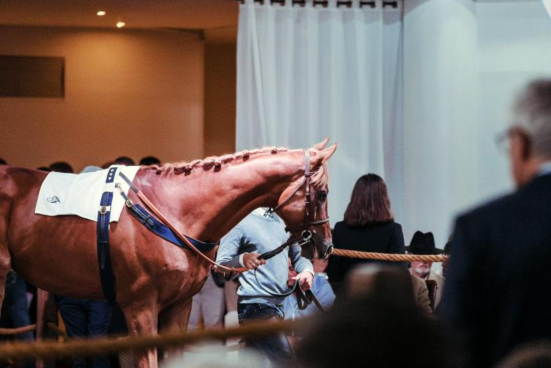 SALES: High-class performers in Arqana Arc Sale