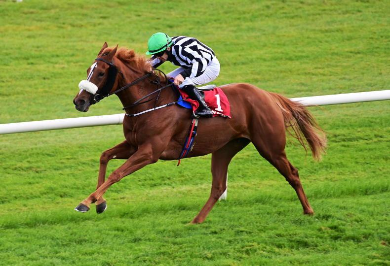 ANDY BATE: Has tactics switch turned Astadash into a winner?