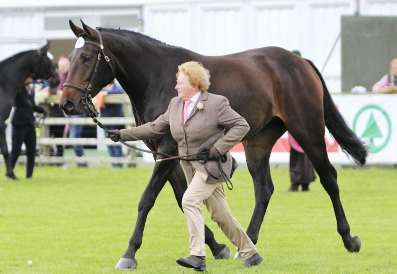 AROUND THE COUNTRY: Boost for Western breeders at Claremorris