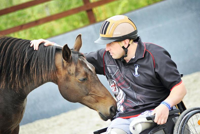 HEALTH: Important lessons horses can teach us