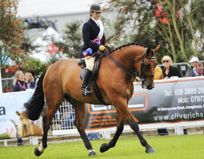 BALMORAL SHOW: Another supreme title for Bradbury and Tierney