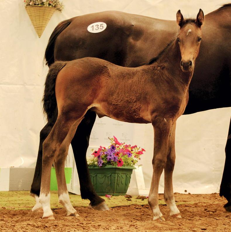 ADVERTORIAL: A quality collection of show jumping and eventing-bred foals