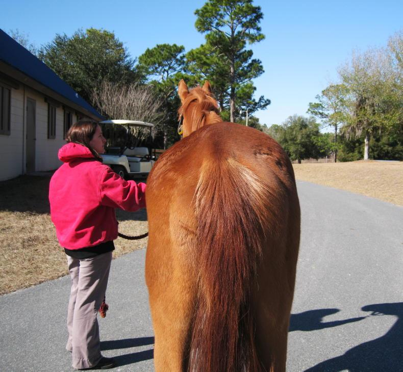 Equine Sacroiliac Joint Dysfunction