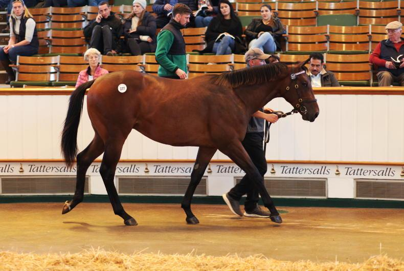 SALES: Sea The Stars colt sells for 1.2 million guineas