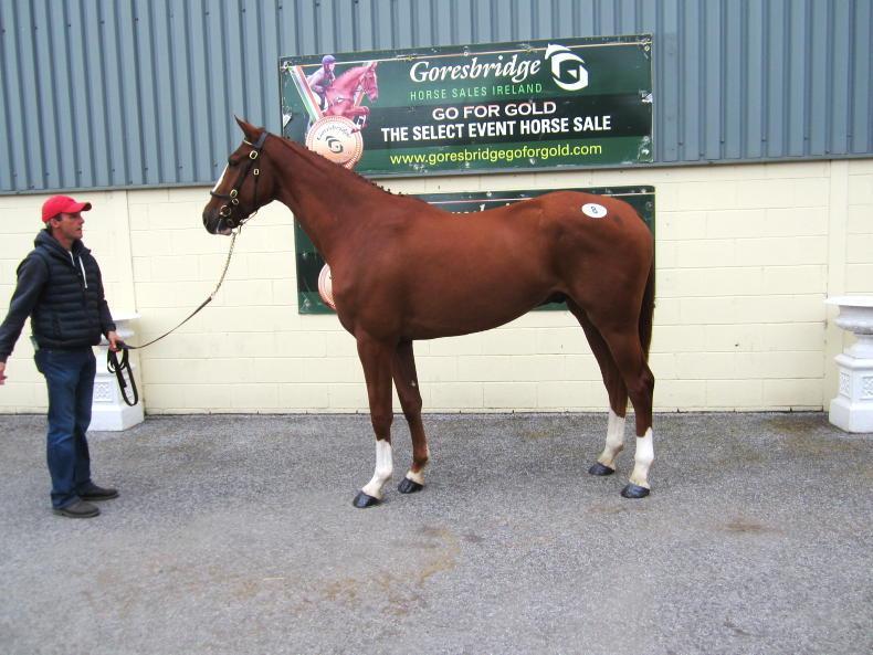 SALES: Kehoe's home-bred gelding tops Goresbridge select sale at €35,000
