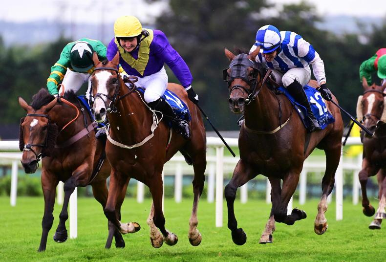 RORY DELARGY: Which one of Willie's should we back in the Cesarewitch?