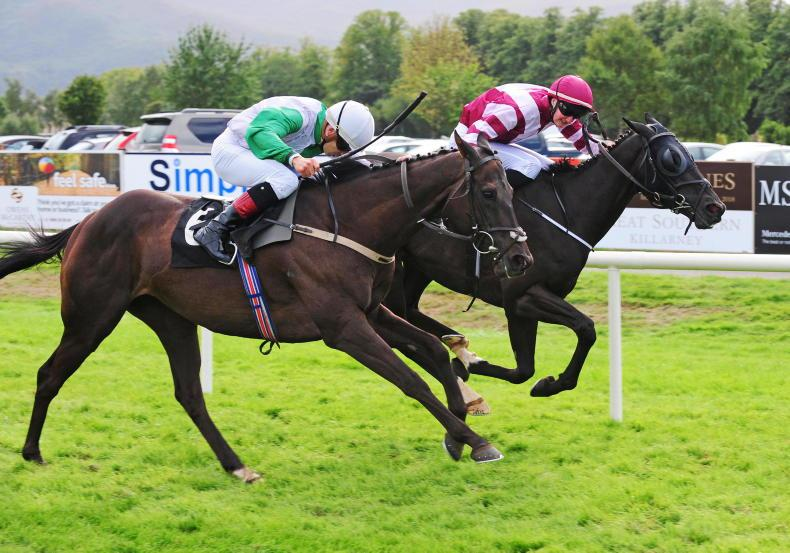 THE CURRAGH SUNDAY: Take the trusted Mullins Exchange Rate in Irish Cesarewitch