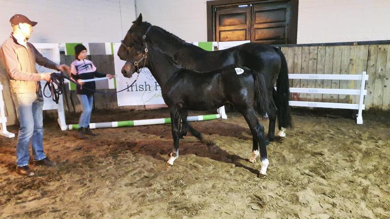 SALES: Top price of €13,500 at Breeders' foal sale