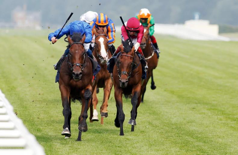 RACING CENTRAL: Lots on the line as Adayar aims to confirm form with Mishriff