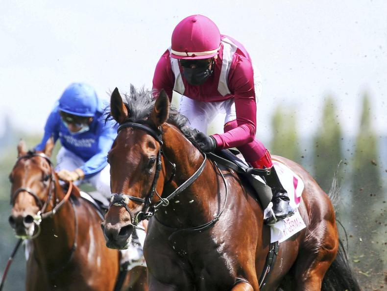 Mishriff still in the mix for Breeders' Cup