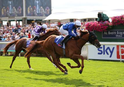 'Young pretender' Yibir all set for Breeders' Cup Turf