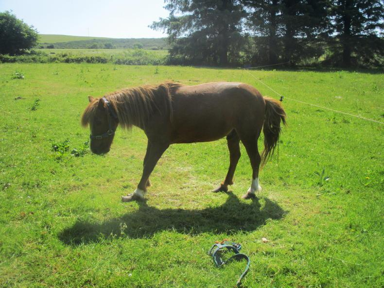 NEWS: Cork man banned from keeping equines for five years