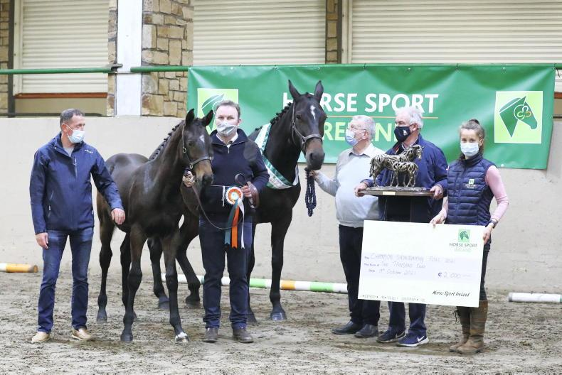 NEWS: Top HSI accolades for foal breeders