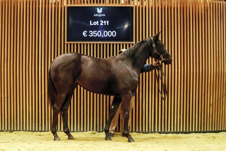 ARQANA OCTOBER YEARLING SALE: Expectations exceeded in record week