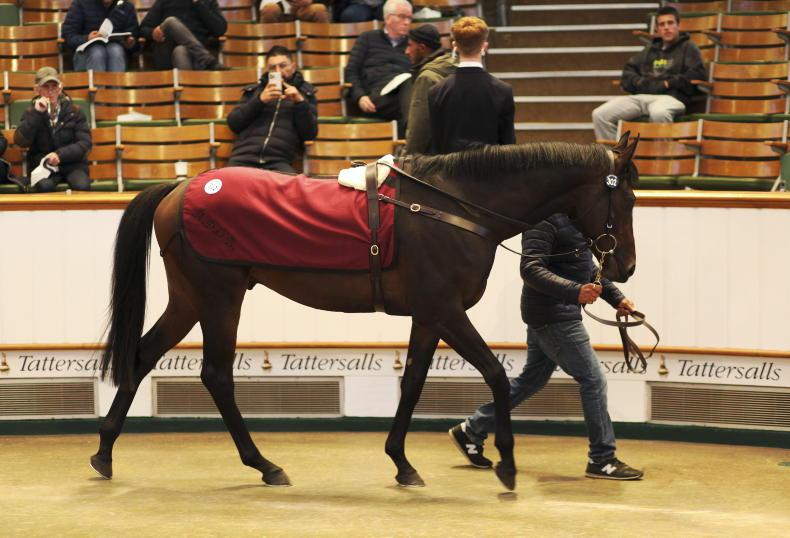 SALES: Ballydoyle listed race winner sold for 325,000gns