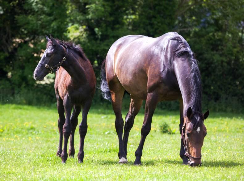 Collecting stallion fees: There must be a better way