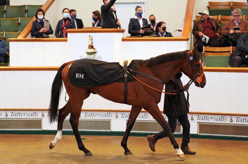 Hannibal Barca sells for 500,000 guineas