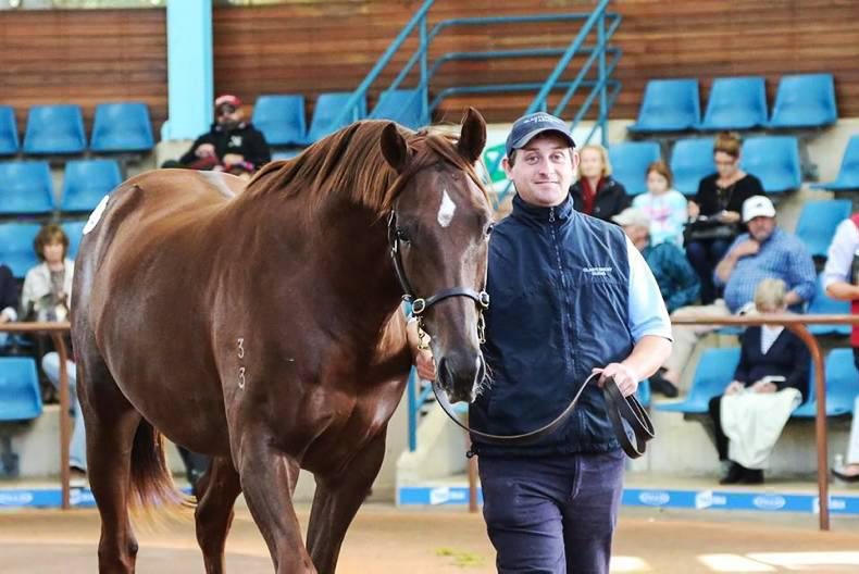 Boom time for Inglis Easter Yearling Sale