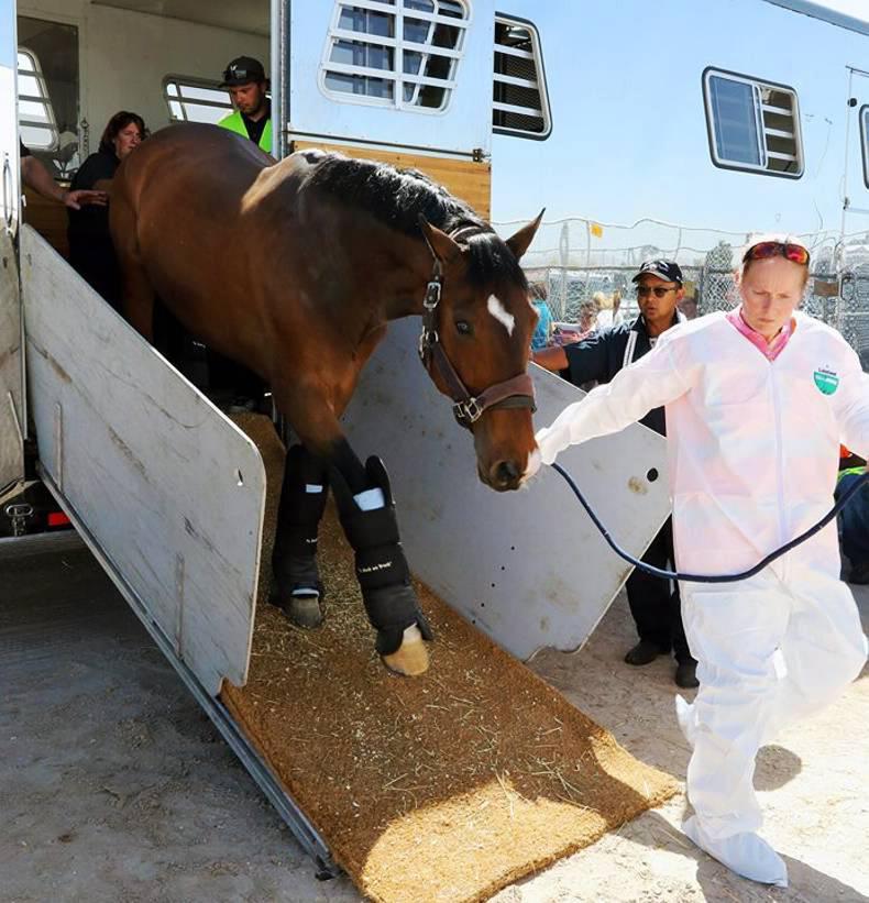 €150m Las Vegas horse cargo takes to the air