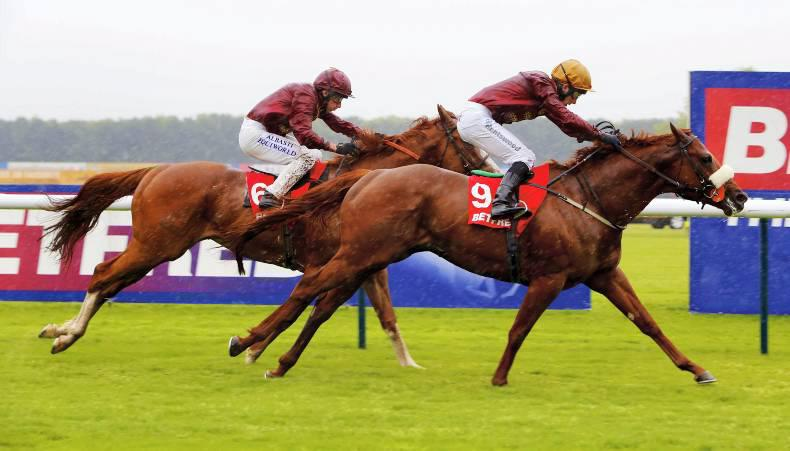 SALES: Irish-bred horses to the fore at Newmarket