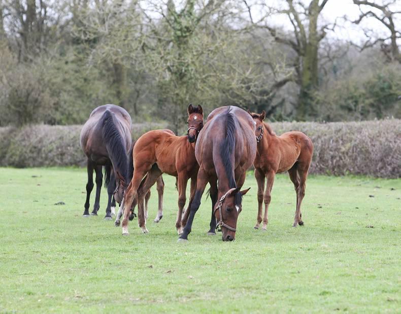 GRASSLAND MANAGEMENT: Soil fertility and fertiliser for horse pasture