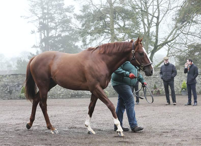 INTERNATIONAL:  Irish-breds win top Italian races