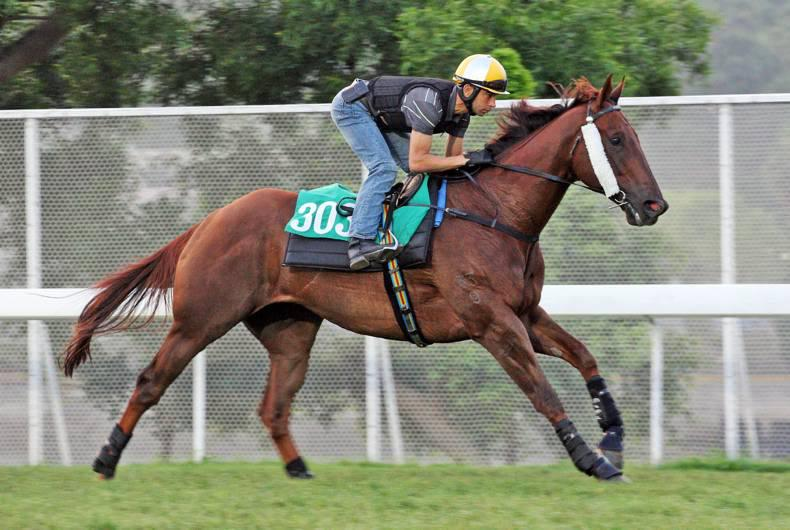 HONG KONG: Able Friend all set for Sunday